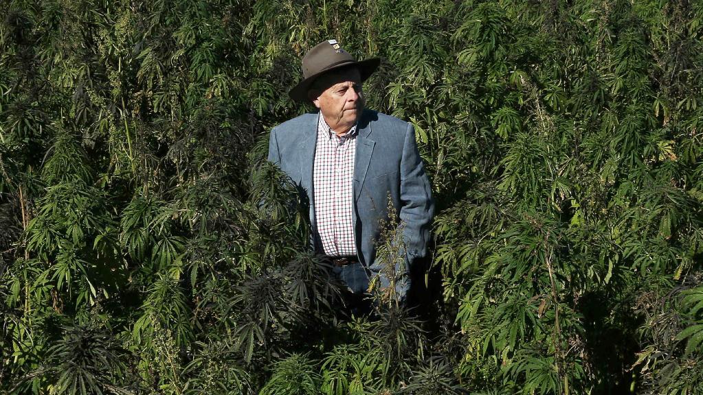 Barry Lambert, the millionaire philanthropist in a field of industrial cannabis near hunter valley