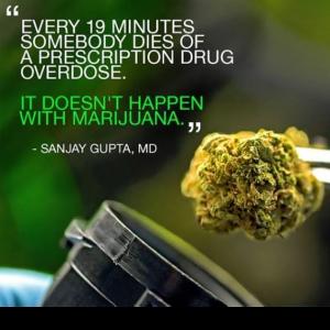 cannabis safer than prescription drugs