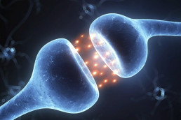 Nerves in the endocannabinoid system
