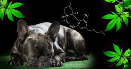 Dog with CBD molecule