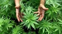 Manchester Cannabis Talk