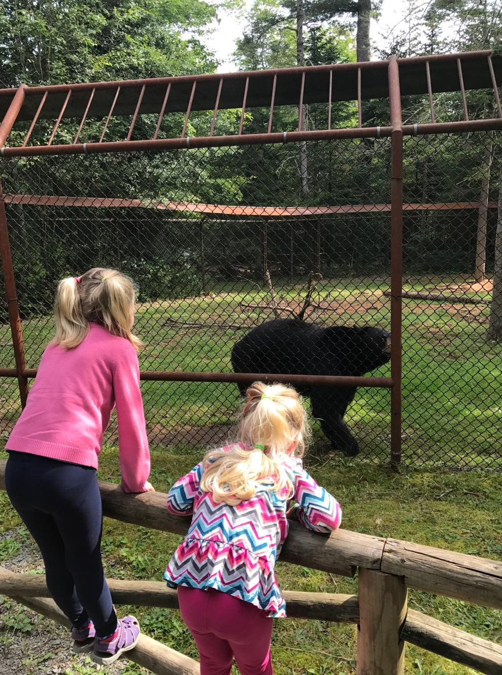 Young children looking bear zoo