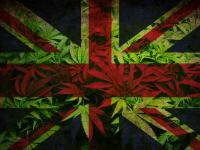 British flag with cannabis background