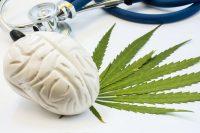 Marijuana brain weed plant