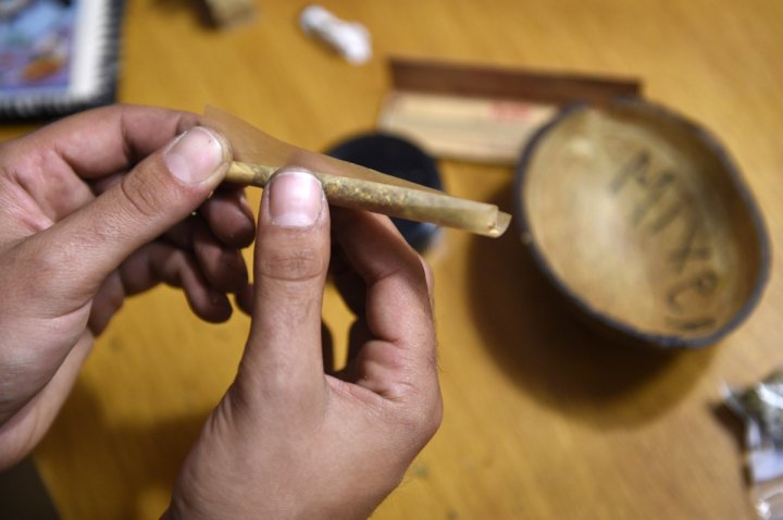 hands rolling cannabis back-roll joint