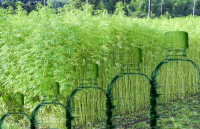 Plastic Bottles made from hemp fibres; field of hemp and plastic bottles