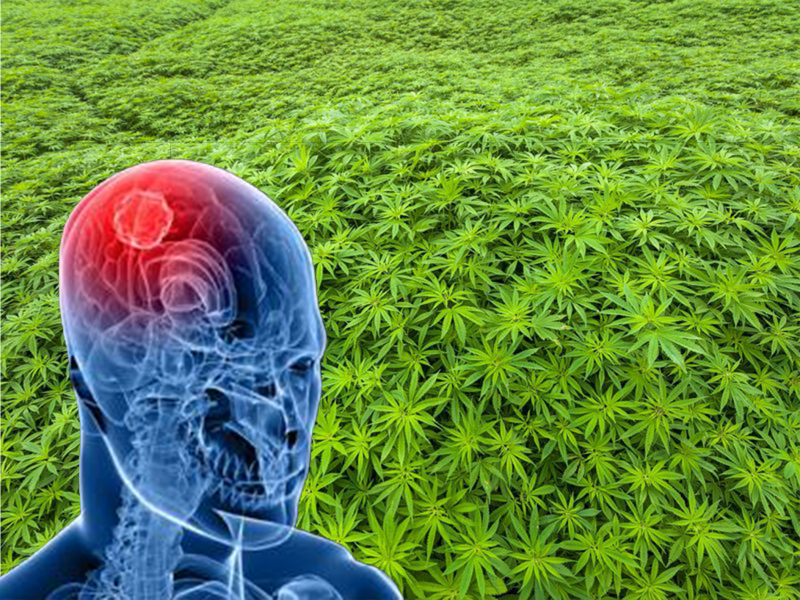 Australian medical cannabis research brain cancer