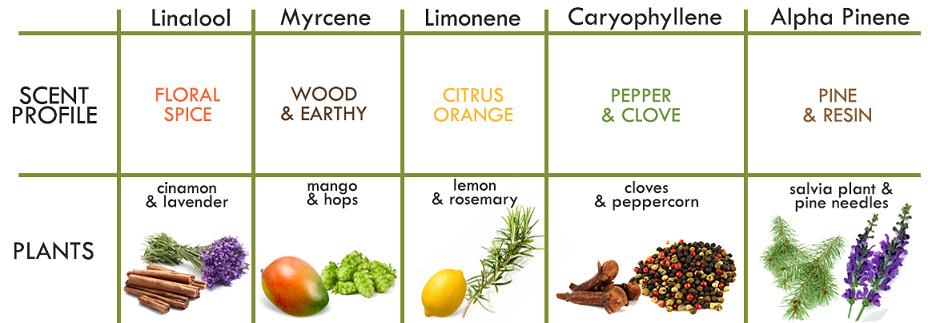 plant terpene profile chart