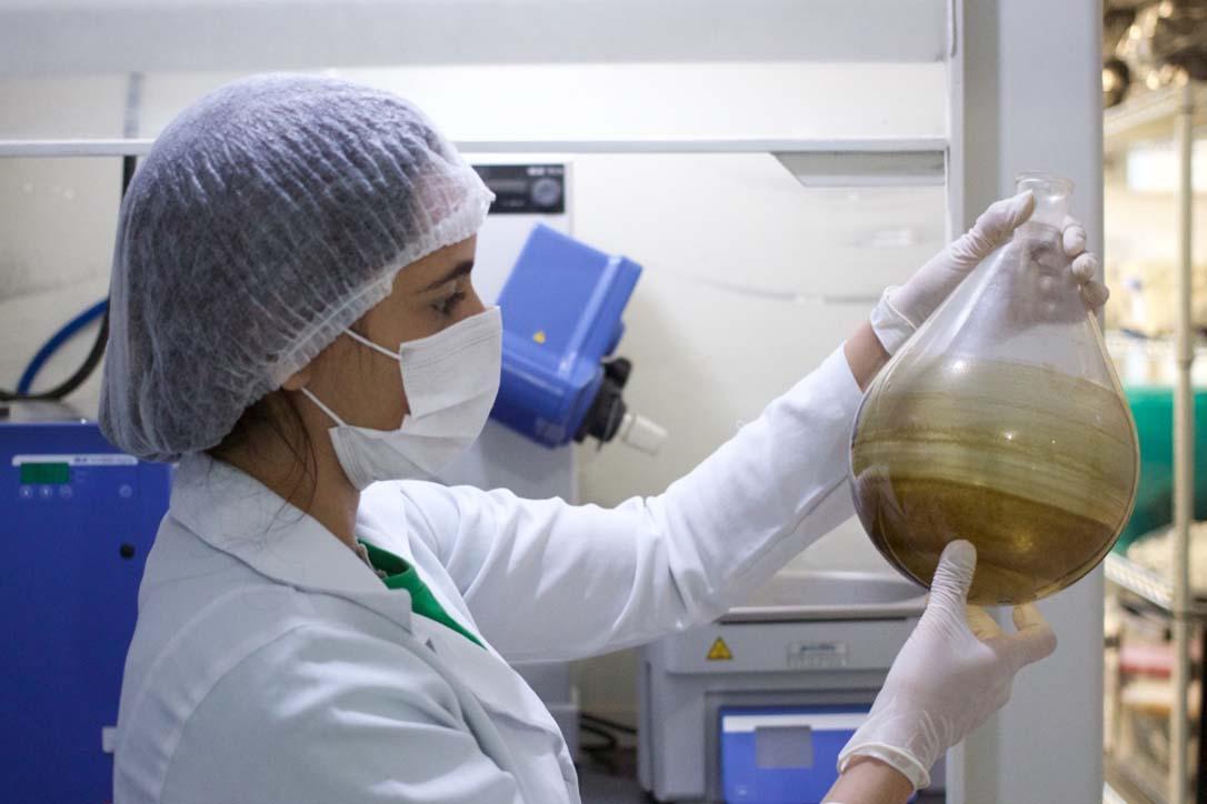 Brazil medical marijuana scientist in white coat examining cannabis oil