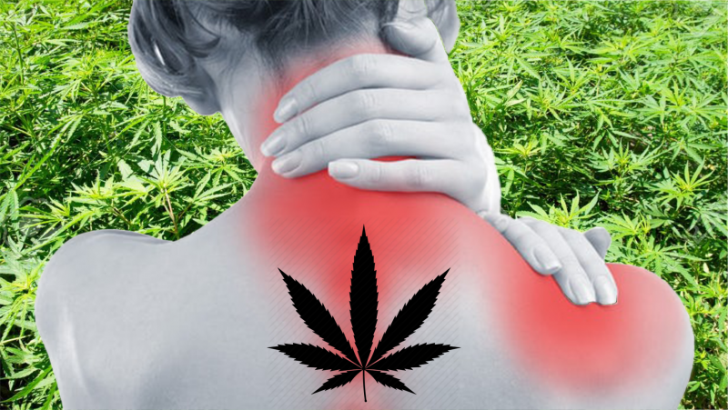 Cannabis Chronic Pain patient behind field of cannabis weed leaf icon