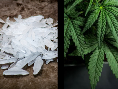 Crystal meth and cannabis plants side by side for comparison