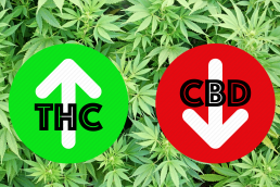 THC in green arrow going up CBD in red arrow going down on background of cannabis leaves