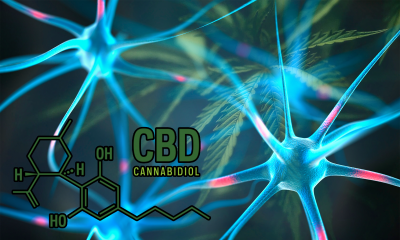CBD molecule with CGI brain neurons on cannabis leaf background