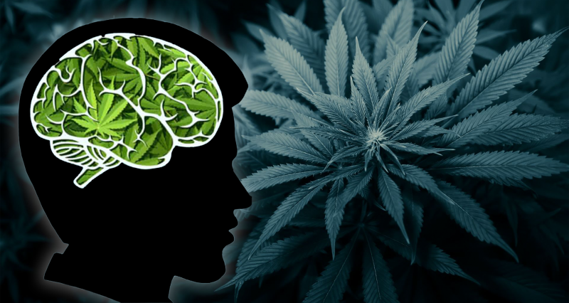 Silhouette of man with cannabis brain on top of marijuana leaves background