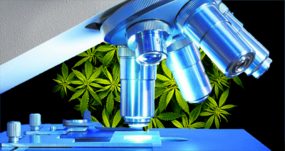 Scientific research equipment on cannabis background