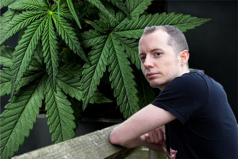 man looking over fence with cannabis leaves in background