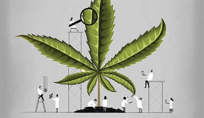 Cartoon researchers investigating large cannabis leaf