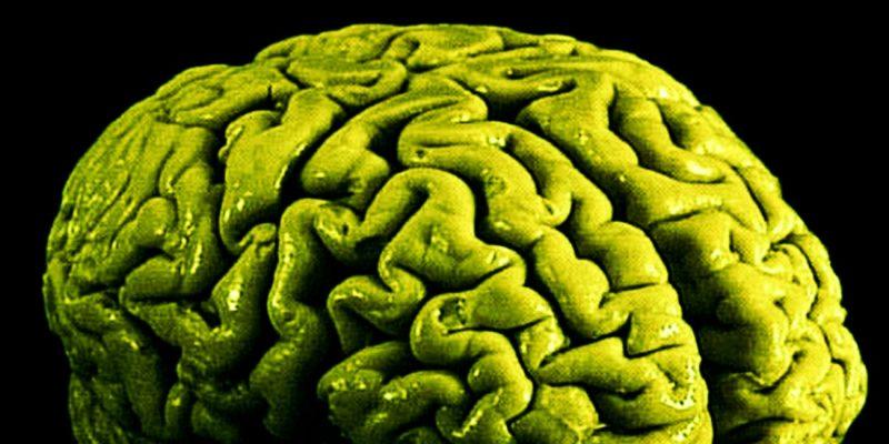 Green brain representing cannabis weed marijuana brain