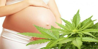 Study investigating whether using cannabis while pregnant is safe