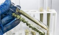 Cannabis flower and cannabis cigarette (marijuana spliff) in test tubes being held by scientist