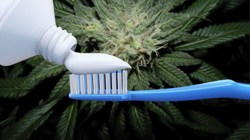 Toothpaste being poured onto toothbrush, with cannabis marijuana plant in background; representing CBD mouthwash and CBD toothpaste