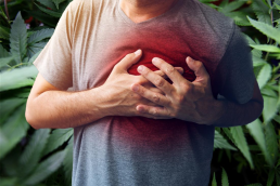 Man holding chest during heart attack; chest area in red to represent heart attack, cannabis background