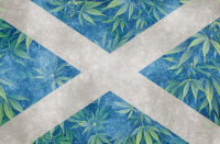 Scotland national flag with cannabis marijuana weed leaves in the background